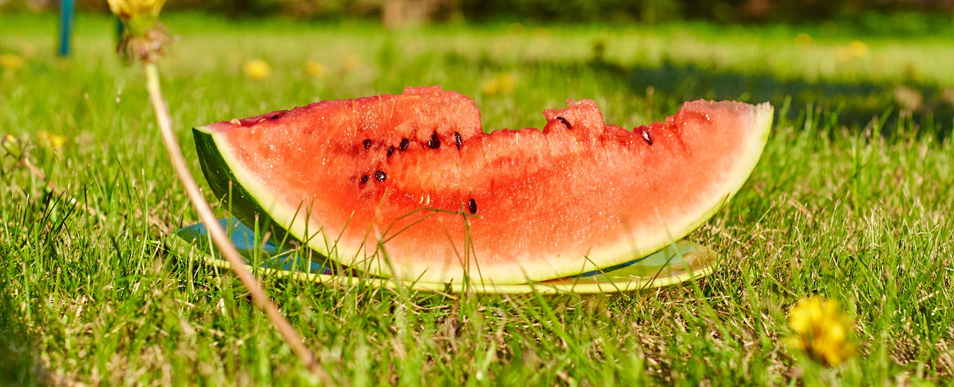 keeping-cool-in-the-shade-eating-cold-foods