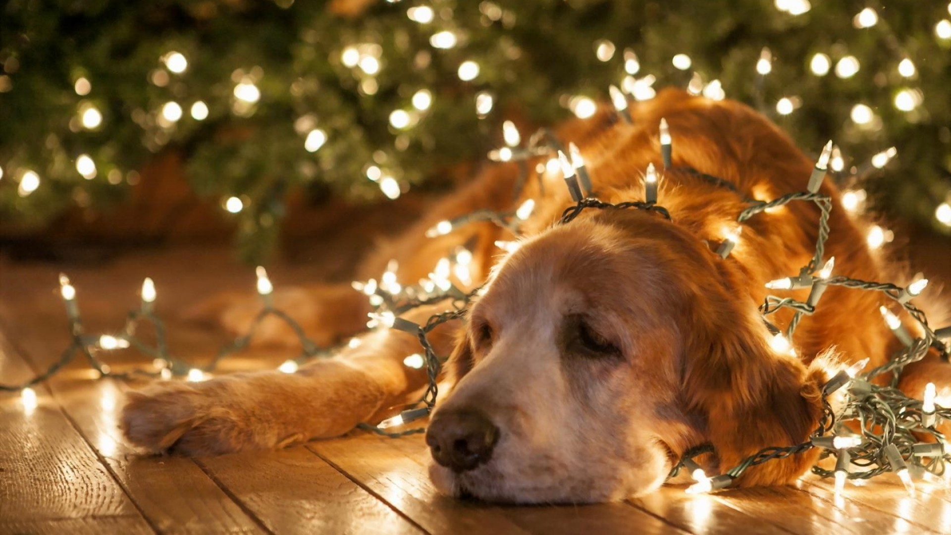 Dog Under Christmas Lights